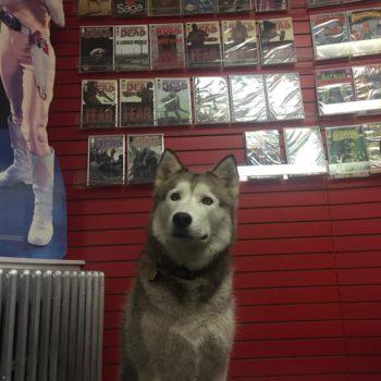 Steel City Comics dog