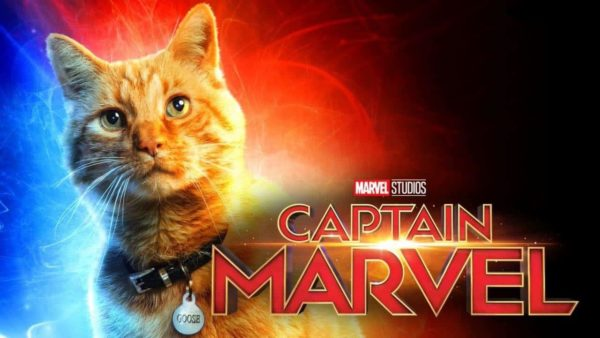 Image result for captain marvel cat